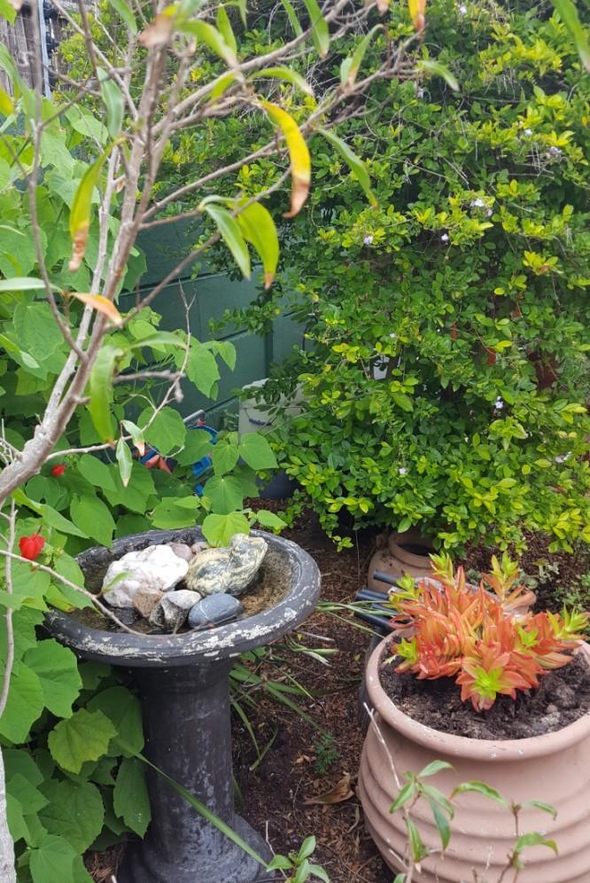 #gardening-with-Elliott